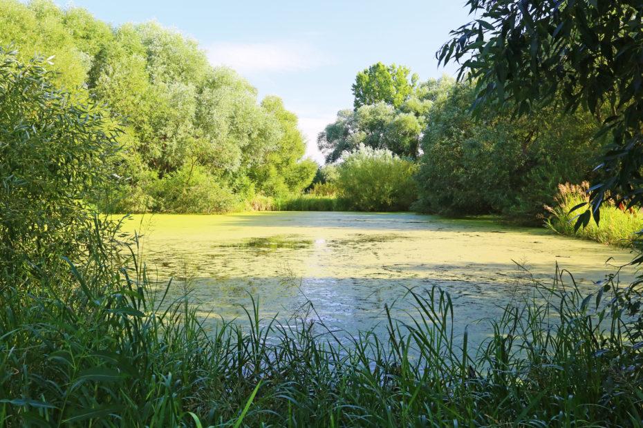 modranske laguny 2